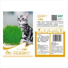 Cat Grass Seeds Herb Plant