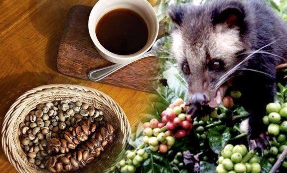 100 Genuine Kopi Luwak Arabica 100g End 9 10 2020 4 15 Pm