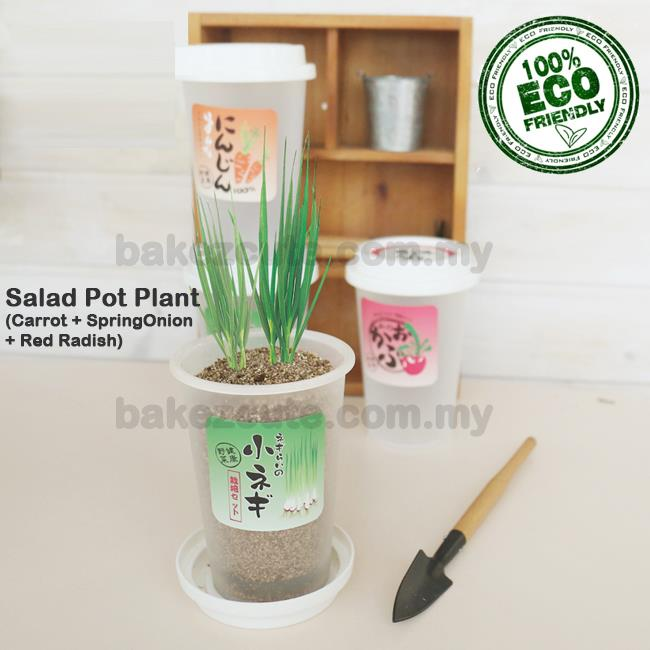 (3pcs / set) Salad Cultivation DIY  Set in Cup Table Pot Plant