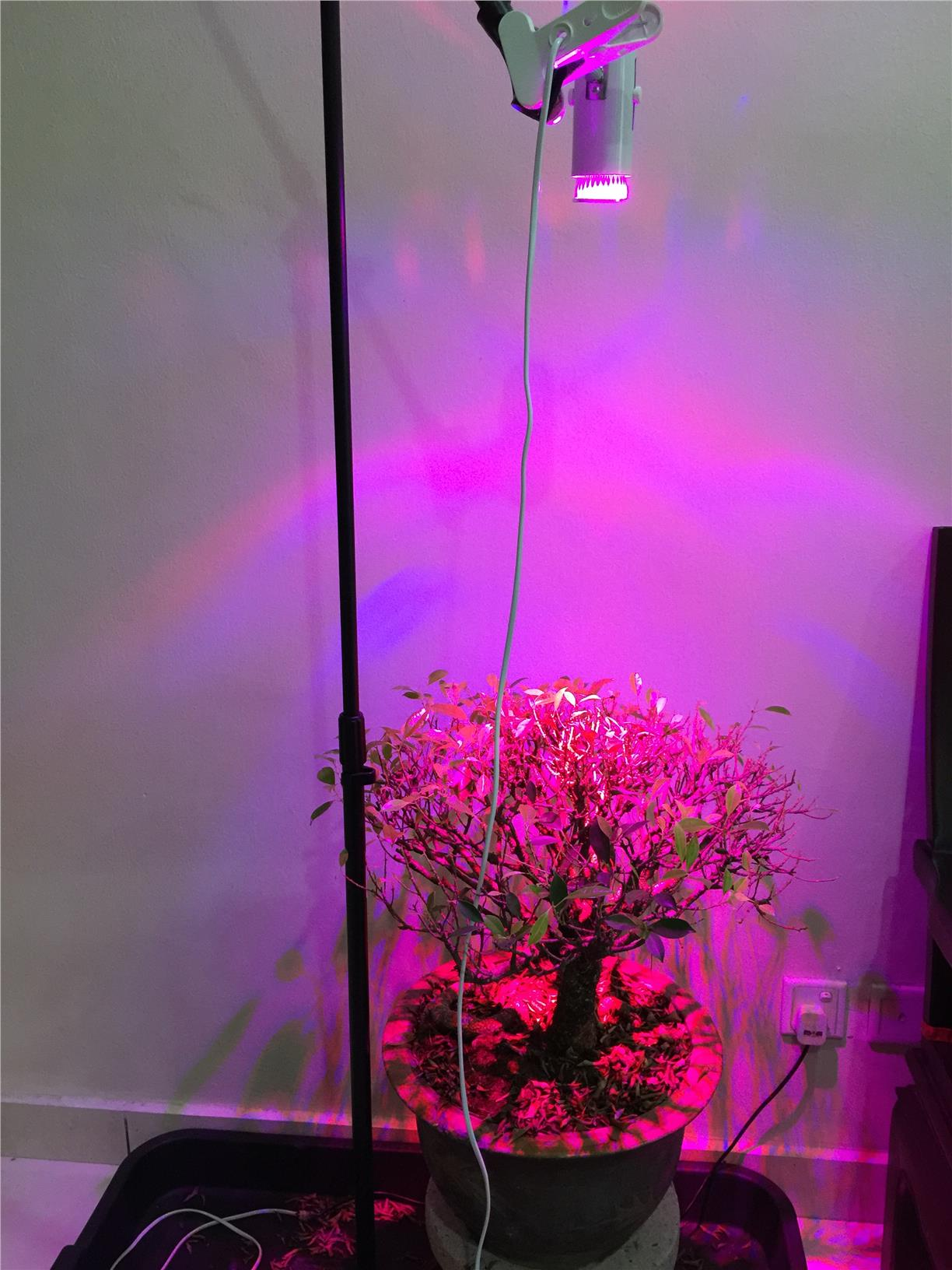 industrial high hydroponic consumption spectrum luminosity full com low led light bulb choice amazon grade dp grow plant power lighting essential