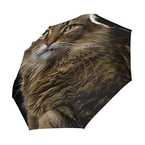 Bolaz Compact Travel Umbrella Maine Coon Cat Auto Open Close Umbrella Windproo
