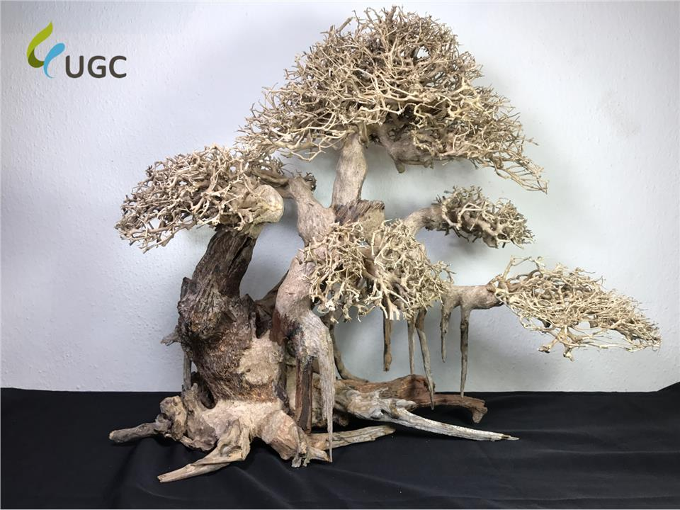 Aquascape Ideas Bonsai Driftwood Aquascape