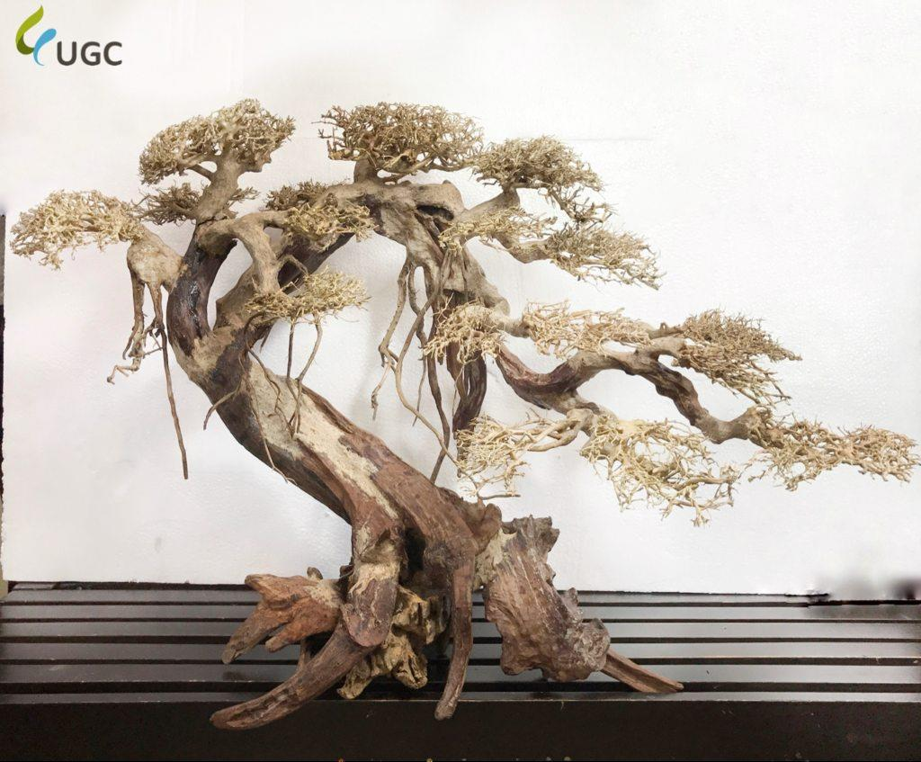 Caridinex Handmade Bonsai Driftwood (end 9/15/2020 6:15 PM)