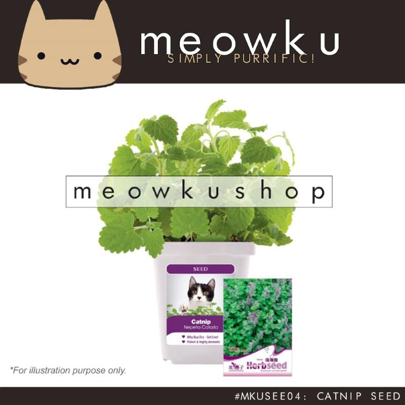 Catnip Seed (Cat Pet Plants Easy To Grow Handy Diy Pokok Kucing)