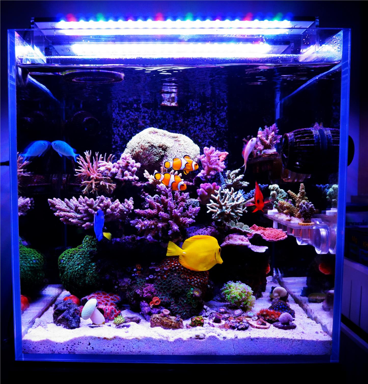 artificial aquarium new of reef do package fake decoration range you coral our think decor what