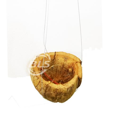 COCONUT SHELL WITH HANGER FOR HANGING FLOWER LAWN AND GARDEN DECOR