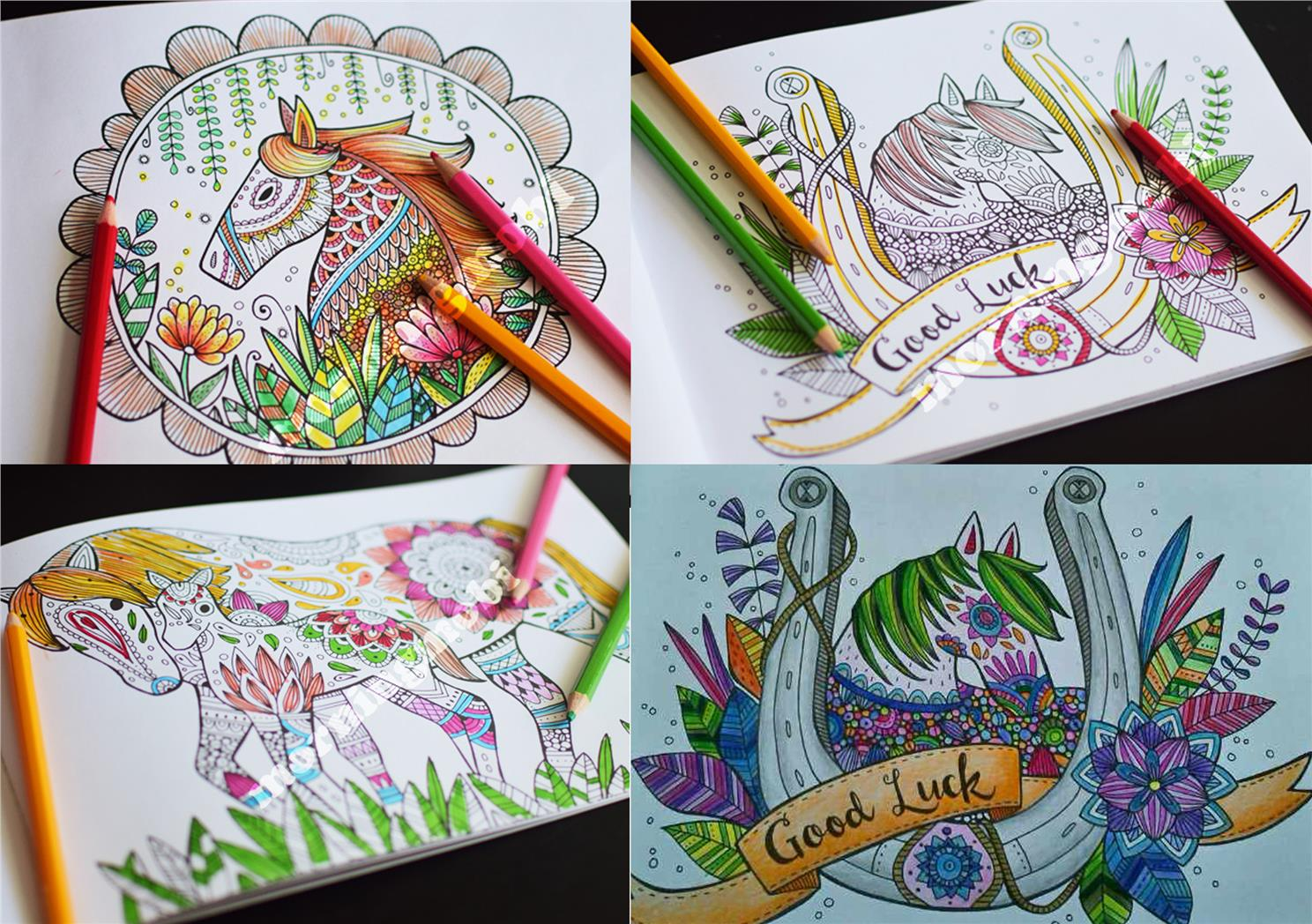 Creative Magnificent Horses Colouring Book features