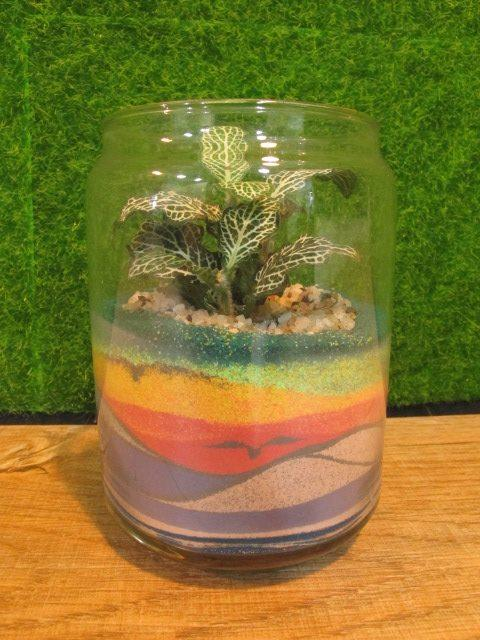 Decorative Color Sand Yellow @ 50g/pack (art terrarium succulent plant