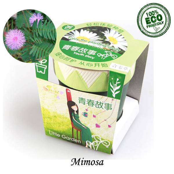 DIY Gift Set - Mimosa Golden Years Urban Garden - Pot Plant Kit