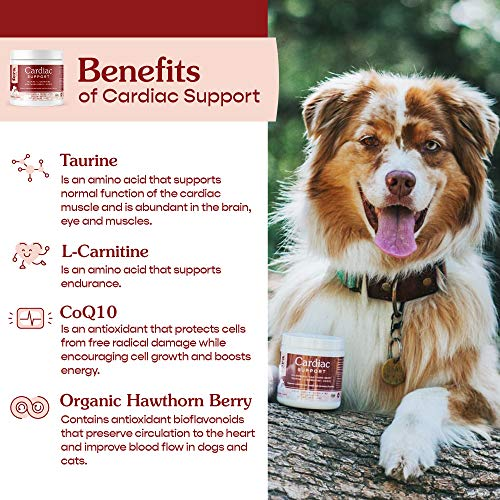 FERA Cardiac Support Supplement for Dogs Cats, Taurine, L-Carnitine, CoQ10, Or