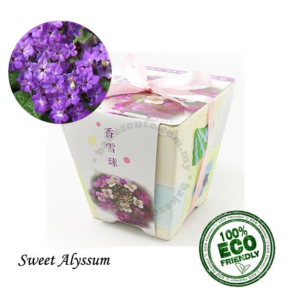 Flower DIY Gift Set - Sweet Alyssum Europe Urban Garden - Pot Plant Ki