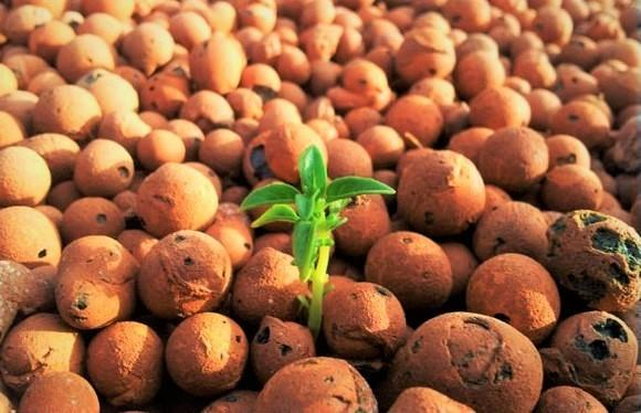 Holland Clay Pebbles (LECA) for Hydroponic & Aquaponic - 1kg Pack
