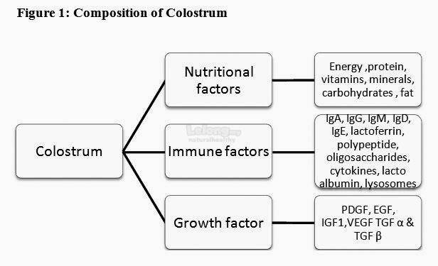 Ig8 Imuno Colostrum Powder (Ig8号牛初乳奶)
