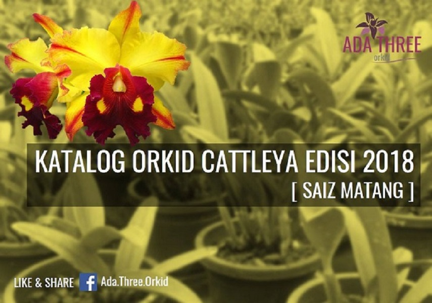 Live Orchid Collections-Cattleya 2018