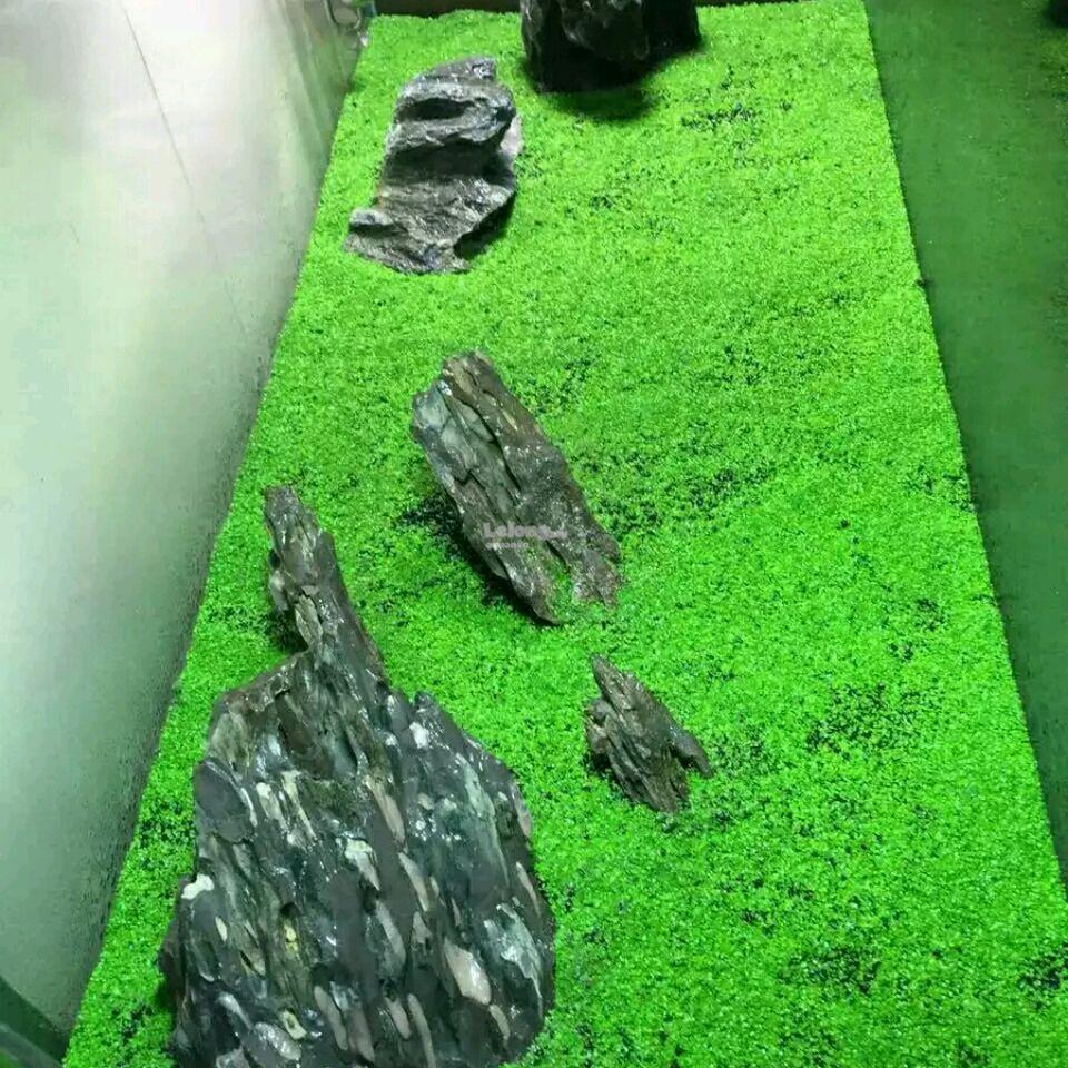 Magic Carpet Seed Aquarium Carpet Plant 7g