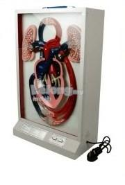 Model of Blood Circulation (Electric)