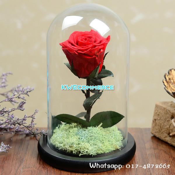 Mother S Day Gift Beauty And The Beast Preserved Fresh Real Flower