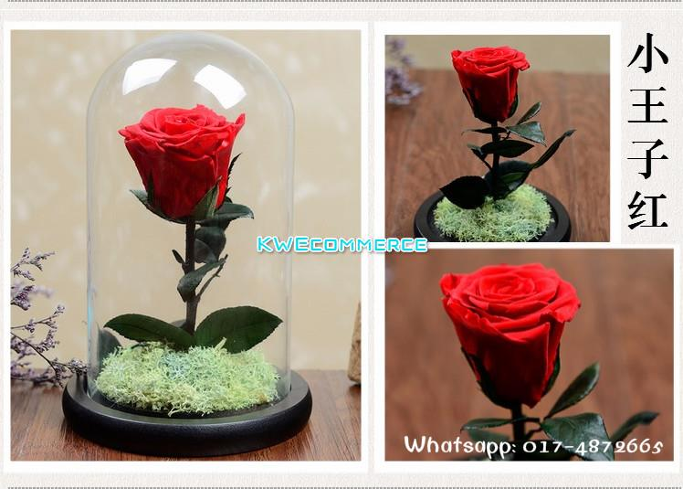 Mother's Day Gift Beauty and the Beast Preserved Fresh Real Flower