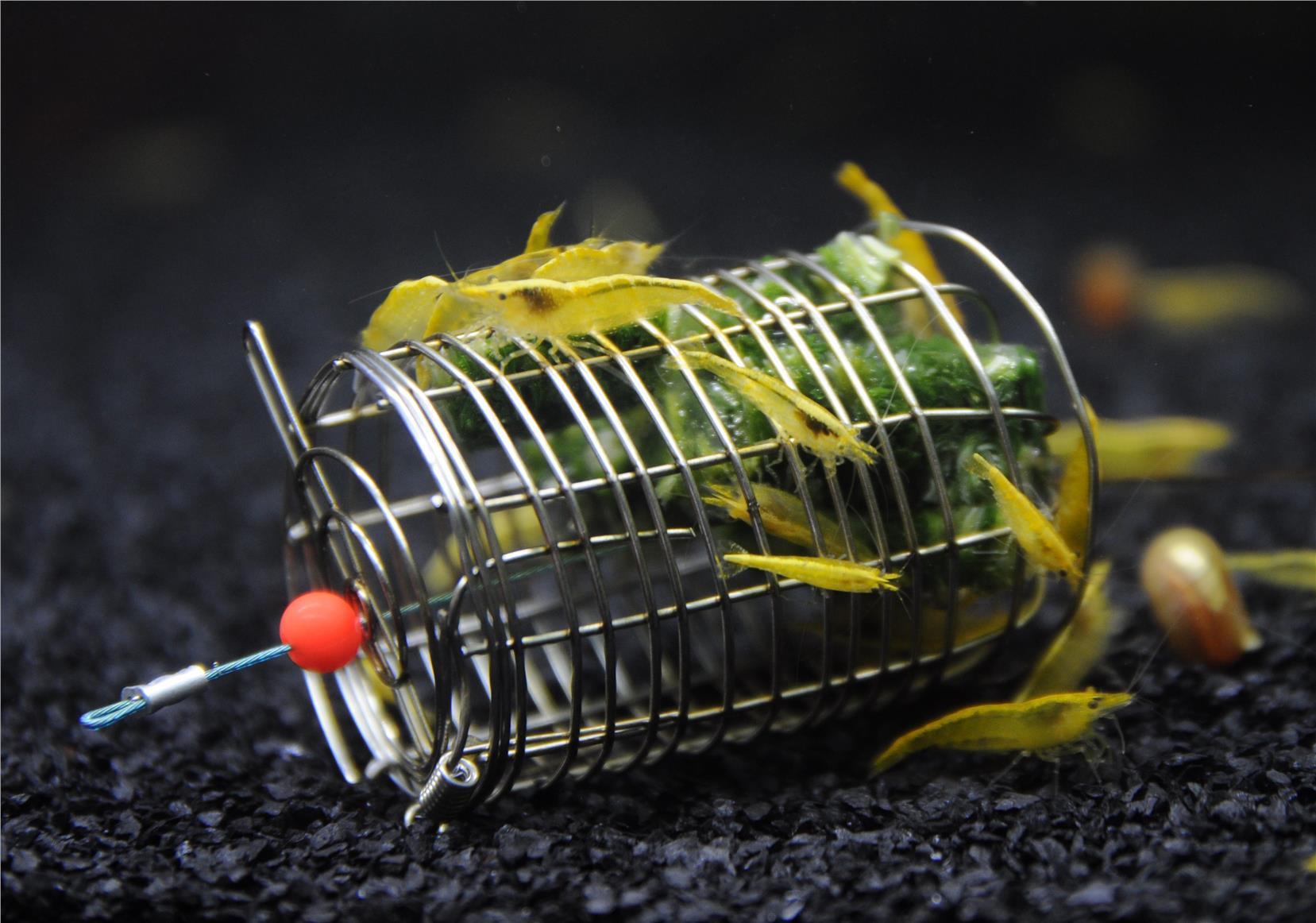 Neocaridina Golden Back Shrimp Freshw (end 7/5/2020 2:36 PM)Freshwater Shrimp For Sale