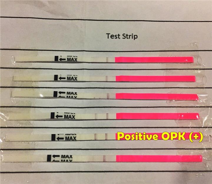What Does A Positive Ovulation Test Look Like