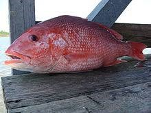 Red Snapper 8-900gm
