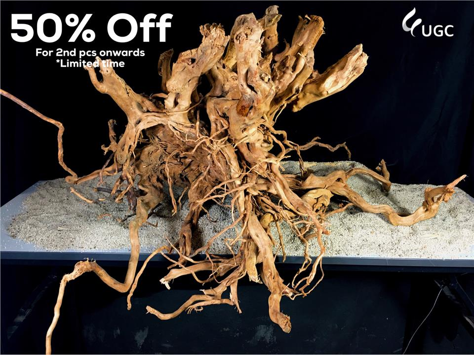 Rhodo 150 Wood (Aquarium/Aquascape/Aquatic/Wood/Root/Vivarium/