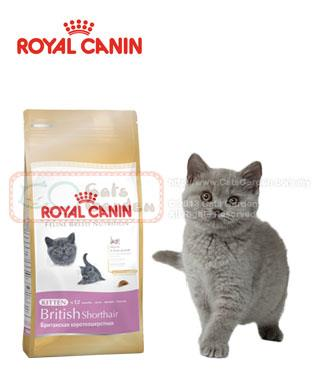 royal canin british shorthair kitten end 3 5 2019 11 15 pm. Black Bedroom Furniture Sets. Home Design Ideas