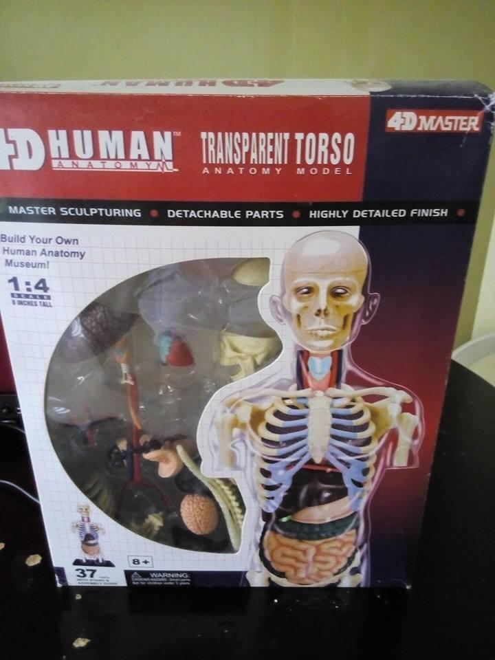 Science Toys - 4D Human Anatomy Model (end 4/2/2020 5:15 PM)