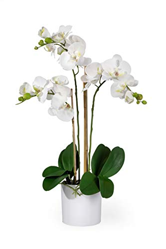 (FROM USA) Serene Spaces Living 3 White Realistic Phalaenopsis Orchids in Pot,