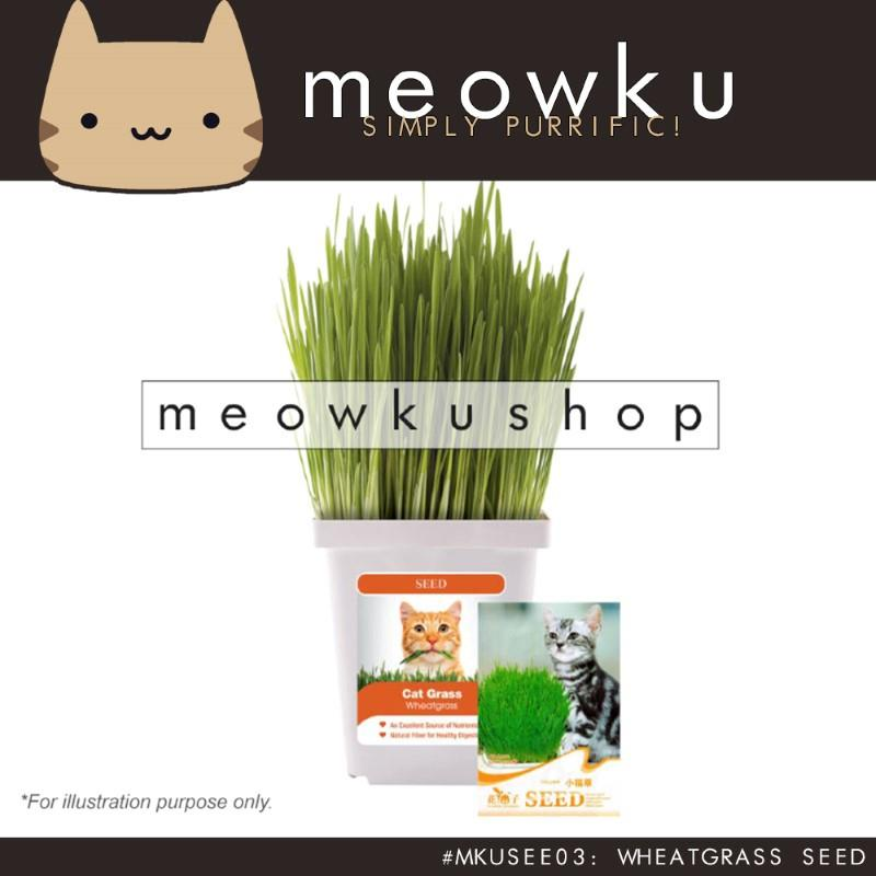Wheatgrass Seed (Cat Pet Grass Plants Easy To Grow DIY Rumput Kucing)