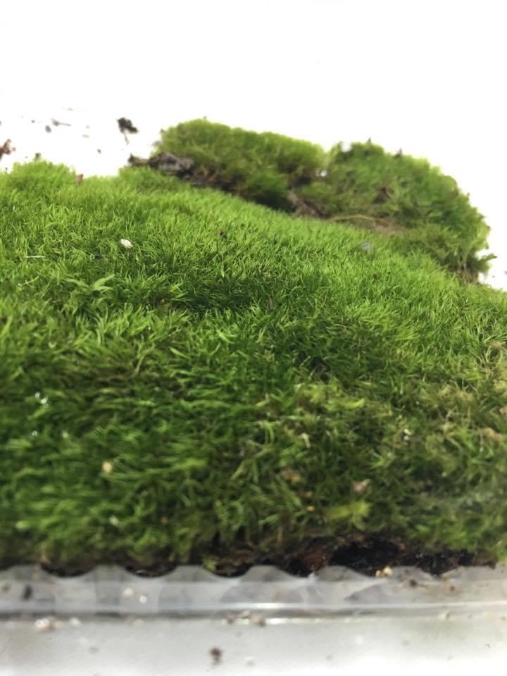 Wool Moss Terrarium Vivarium End 10 19 2019 11 15 Am