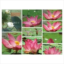 LOTUS FLOWER IN THE WILD - THE WHOLE SERIES