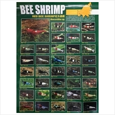 Bee Shrimp Poster