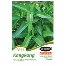 V11 WATER SPINACH VEGETABLE SEED BIJI BENIH  KANGKONG