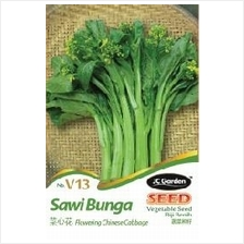 V13 FLOWERING CHINESE CABBAGE VEGETABLE SEED BIJI BENIH SAWI BUNGA