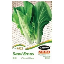 V03 CHINESE  CABBAGE VEGETABLE SEED BIJI BENIH SAWI EMAS