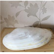 Nature Real Pearl Seashell Shining Home decoration Display Gift