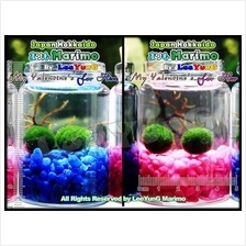 For My Valentine (Him/Her) Genuine Japan Cladophora Aegagropila Marimo