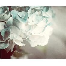 [Free shipping]Shabby Chic Wall Decor Teal Aqua Turquoise Hydrangea Photograph