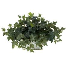 (FROM USA) Nearly Natural 6715 14in. Ivy with White Wash Planter Silk Plant