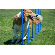 Dog Weave Poles Training Weave Poles Stake Type Dog Agility Super Strong Great