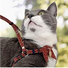 NECO ICHI Zen Fish Charm Cat Harness & Leash Set