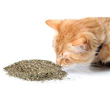 Cat Kush Organic Catnip, Safe Premium Blend Perfect for Cats, Instilled with M