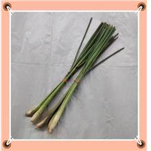 Citronella Lemongrass香茅(3-4pcs)