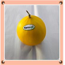 Sun Melon